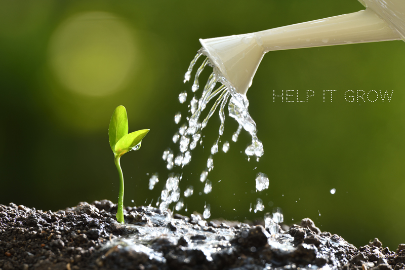 grow your business pensacola website design